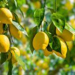 I sette benefici del limone per chi fa sport